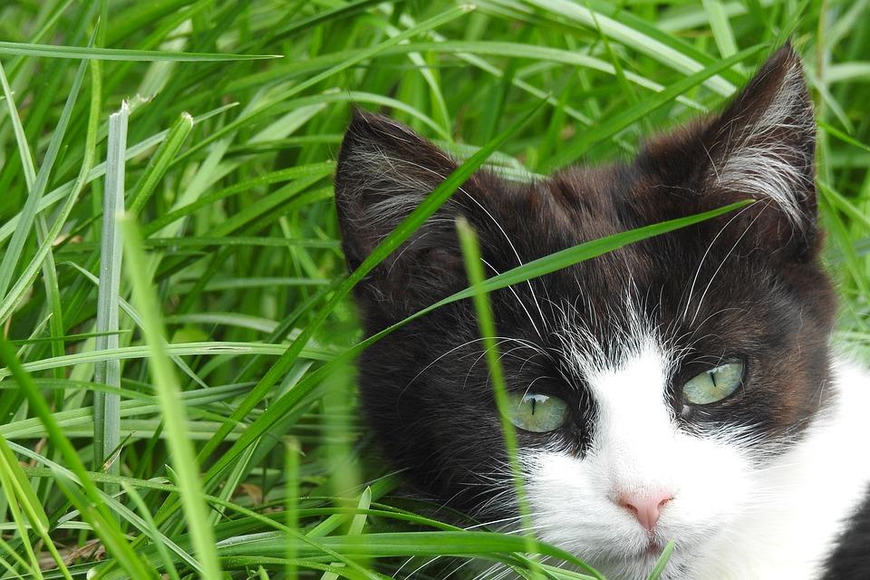 najlepšie vyzerajúci čierna mačička