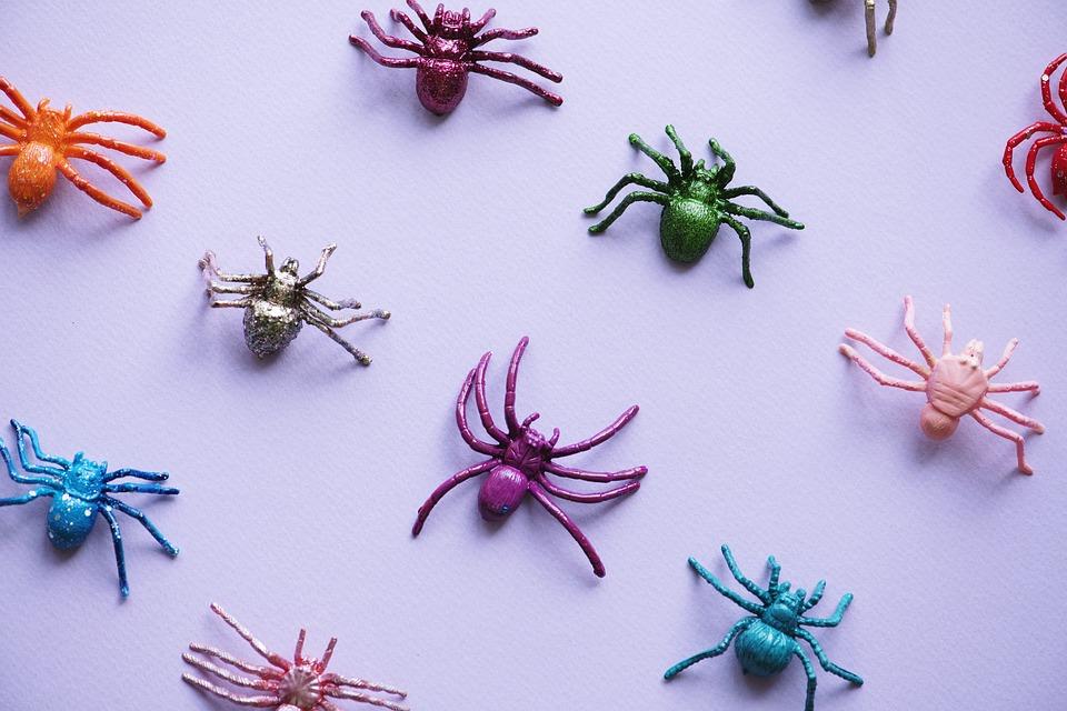 Schreibtisch Natur Spinne · Kostenloses Foto auf Pixabay