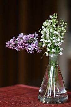 Muguet, Lilas, Bouquet, Fleur, 1Er Mai
