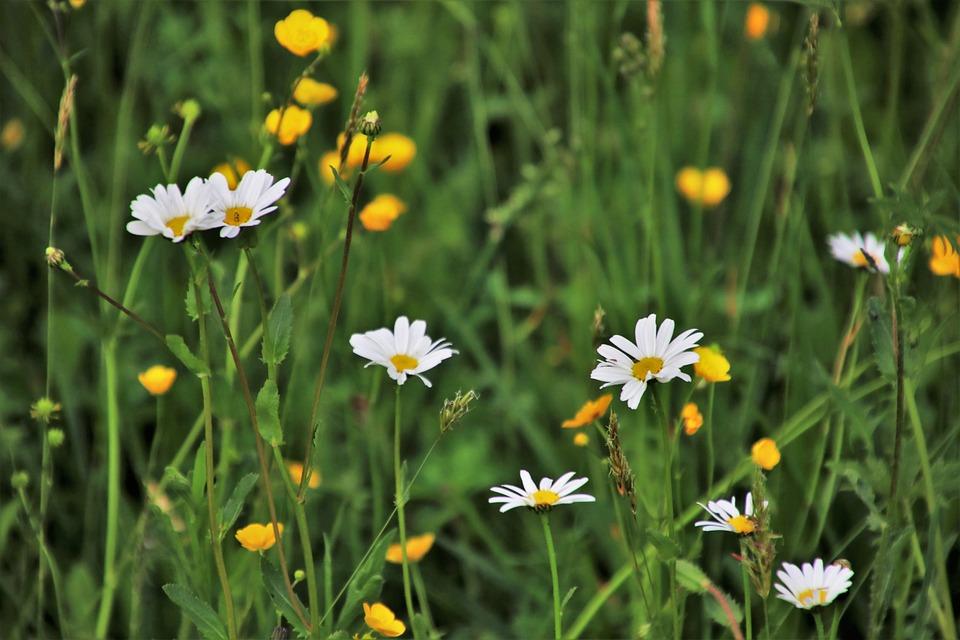 Nature Fleur Mai Photo Gratuite Sur Pixabay