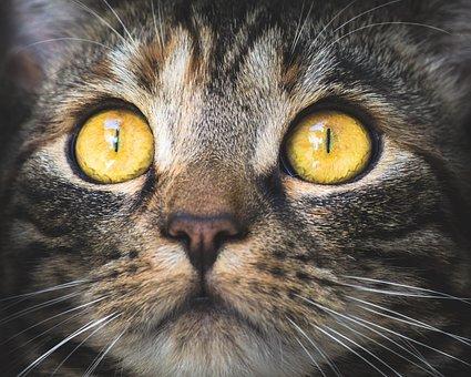 Unduh 93+  Gambar Kucing Anggora Hd Paling Baru