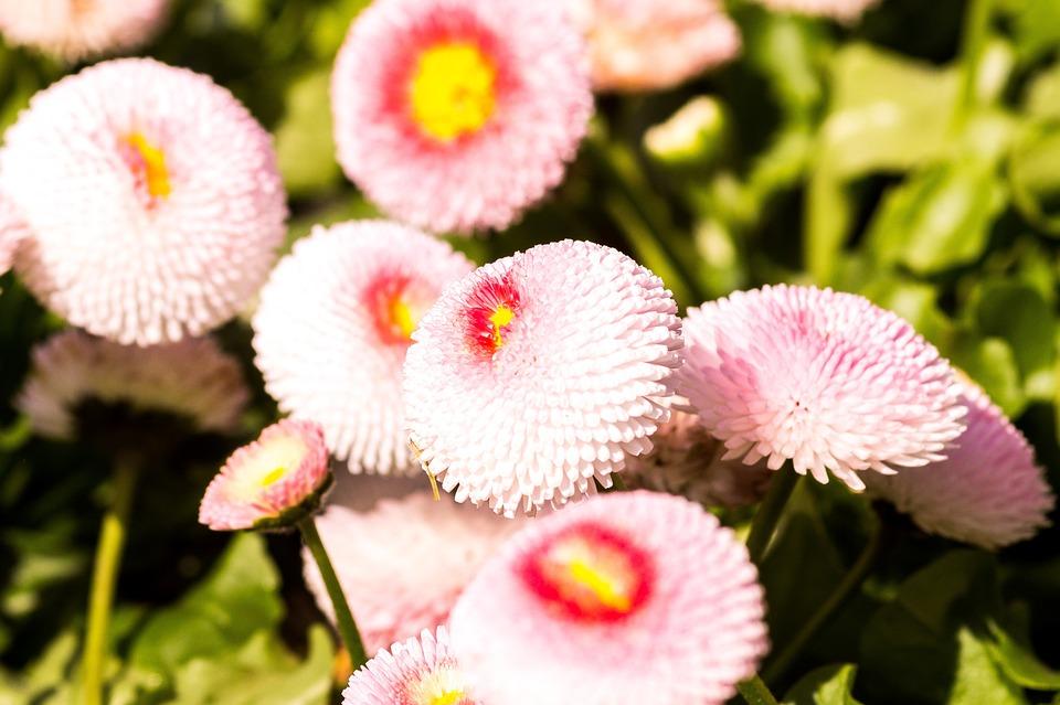 Flower nature plant free photo on pixabay flower nature plant garden flowers spring summer mightylinksfo