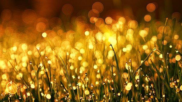 Fű, Rét, Golden, Harmat, Krisztina