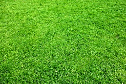 Grass, Lawn, Garden, Green, Lush