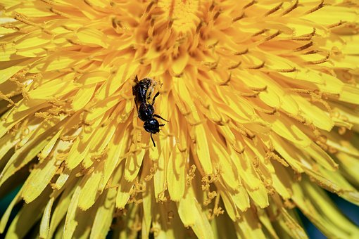 Ant, Black Ant, Formicidae, Insect