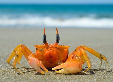 Crustaceans Images · Pixabay · Download Free Pictures