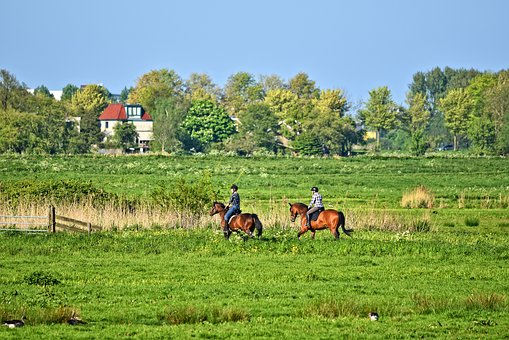 Equitación belice