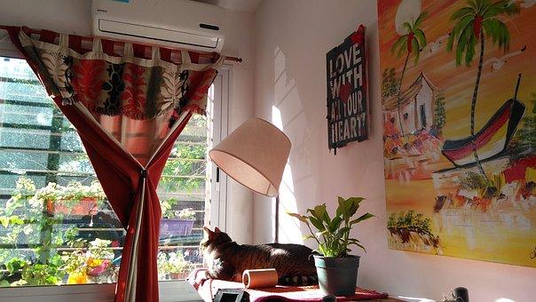 Dalam, Rumah, Cahaya, Kehangatan, Kucing