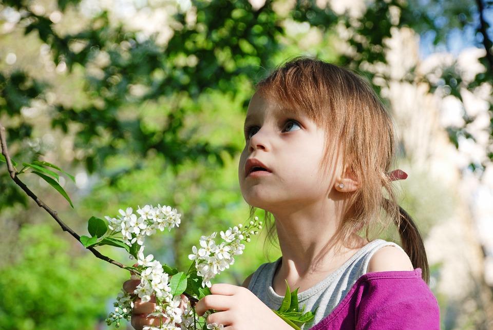a4325c42f7fc Príroda Kvetina Leto - Fotografia zdarma na Pixabay