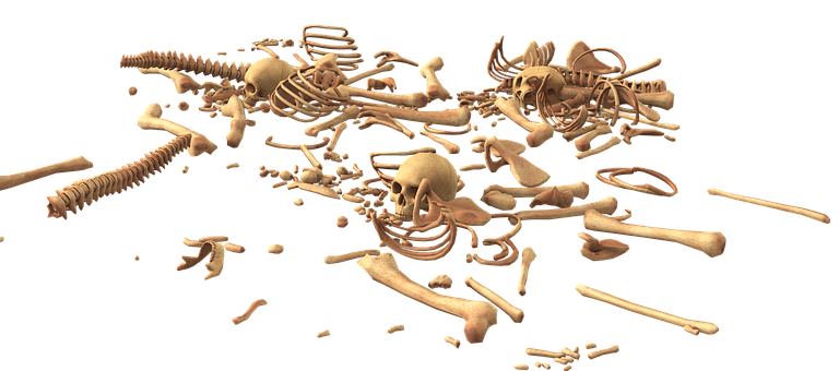 Skull, Bone, Skeleton, Bones