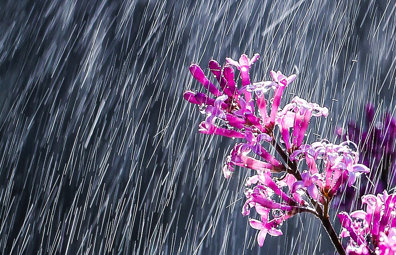 картинки идет дождь на рабочий стол когда-либо мечтали отправиться