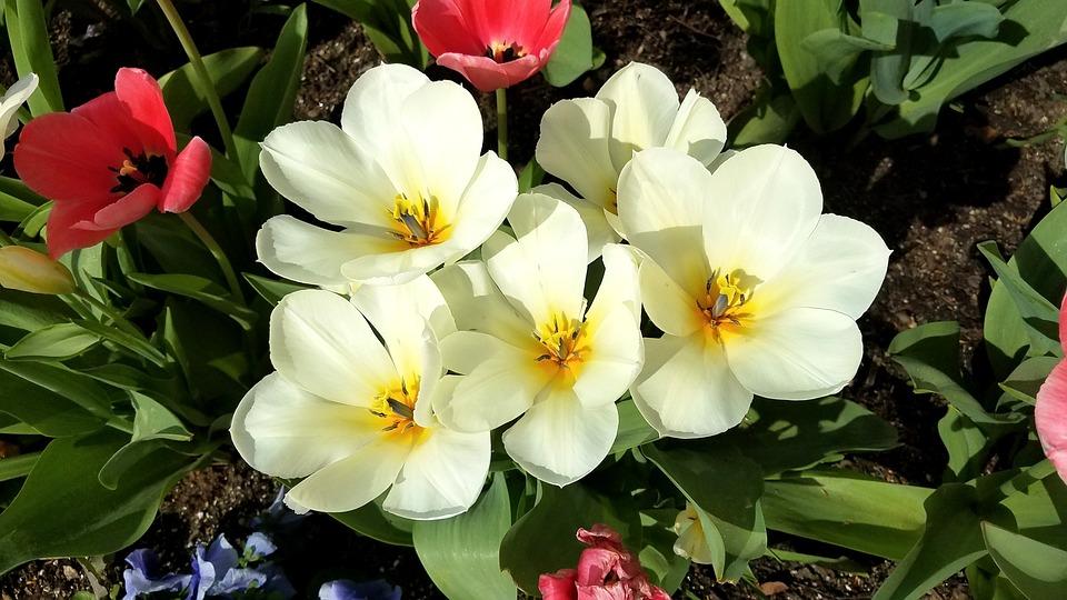 fleurs printemps été
