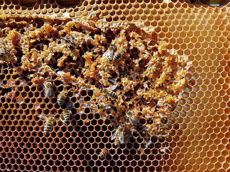 Honeycomb, Bees, Honey, Insect, Nature