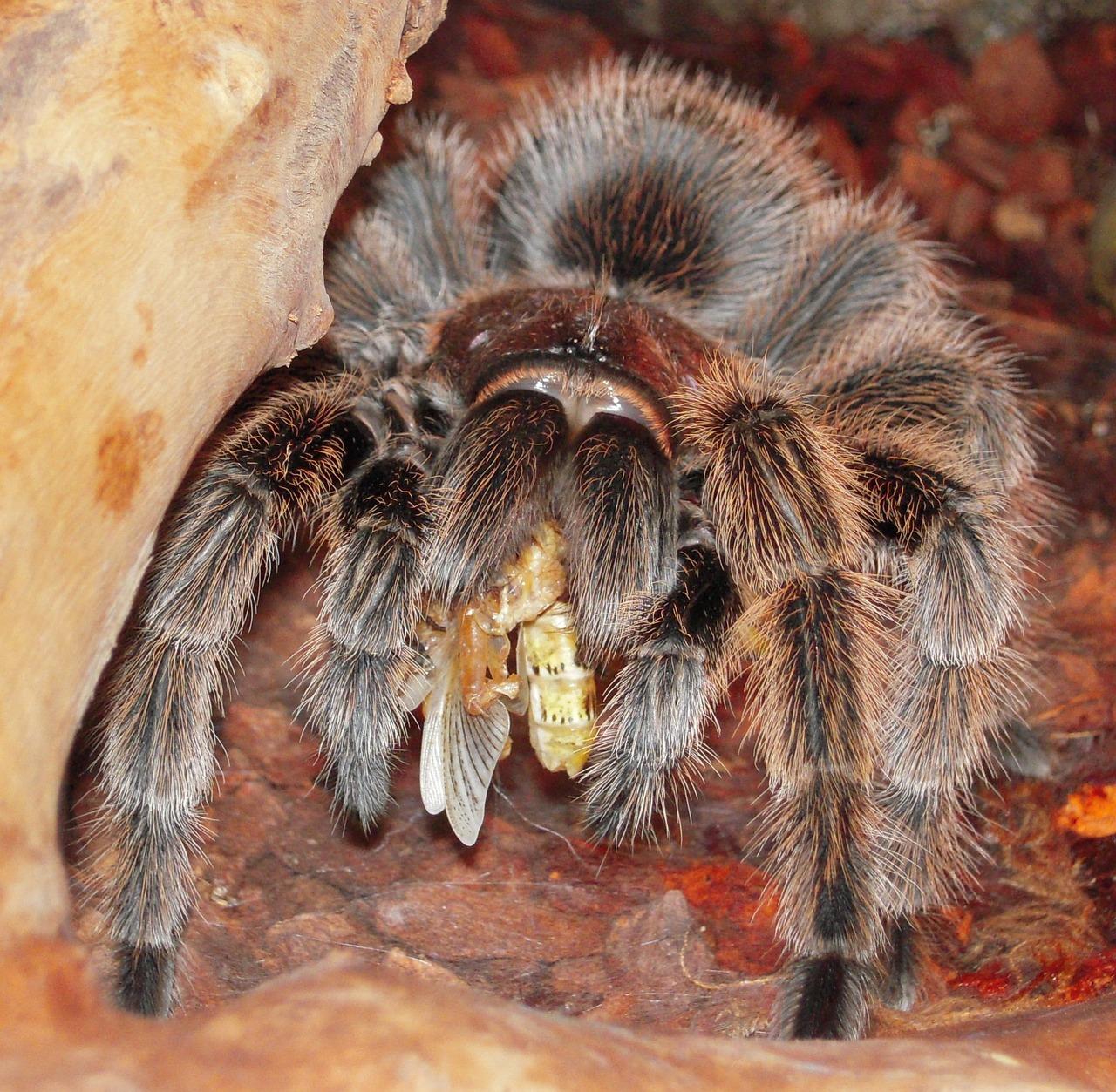 обязуется картинки с пауками тарантулами мозаичные