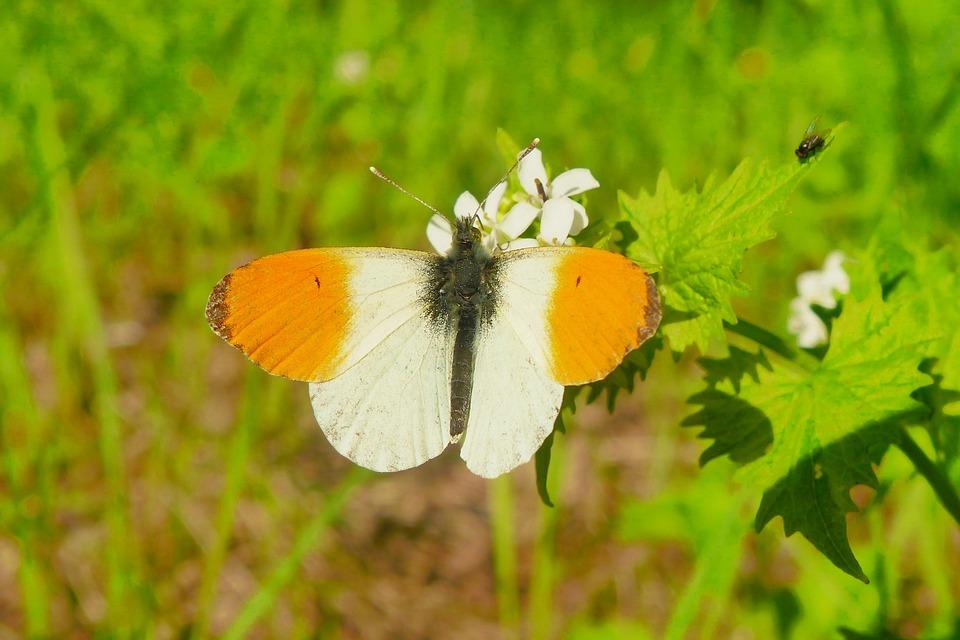 410+ Gambar Hewan Invertebrata Kupu Kupu HD Terbaru