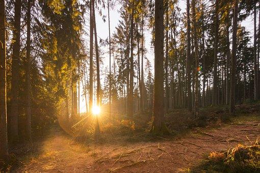 Bosque, Bosques, La Luz, Luz Solar