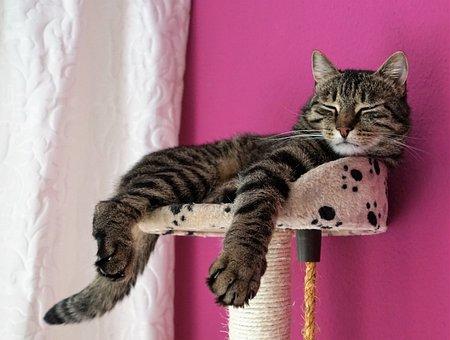 Trägheit, Faulheit, Pause, Katze