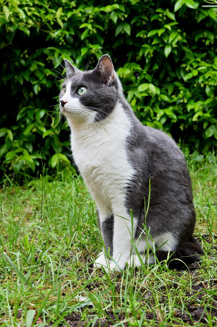 серо белая кошка фото видео заметно
