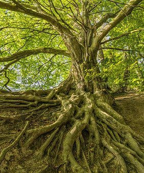 1,000+ Free Tree Root & Root Images - Pixabay