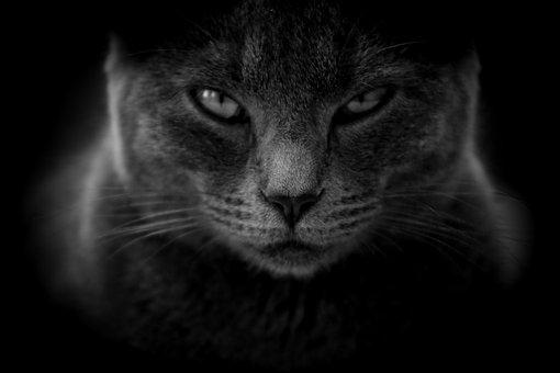 猫, ムーディー, 怒って, クローズ アップ, 黒と白, 猫の目, 灰色の猫