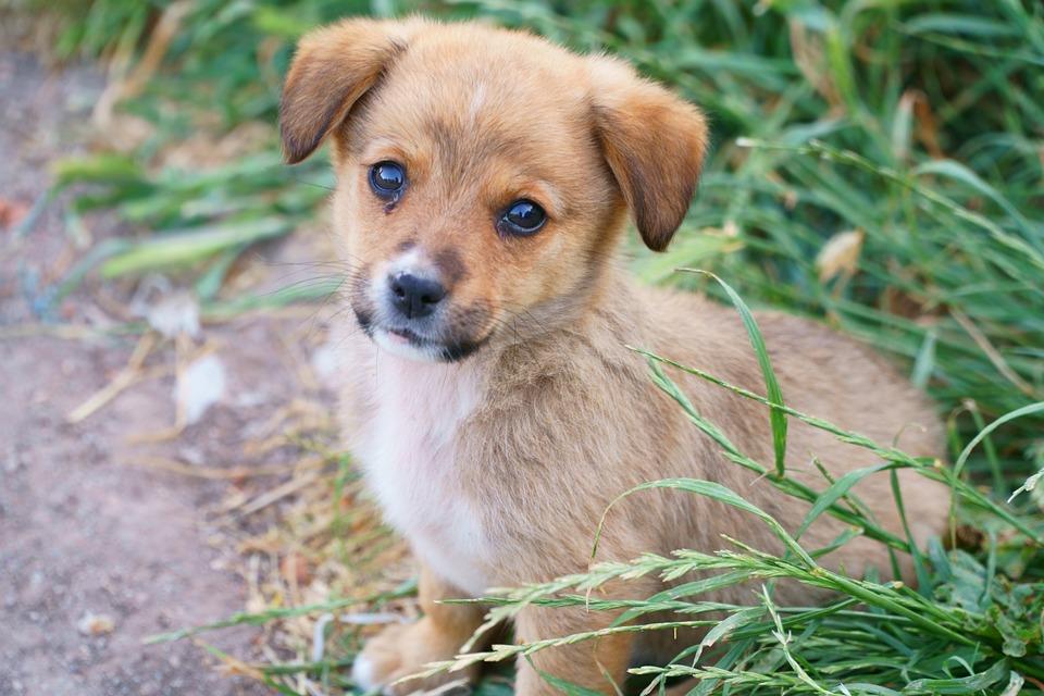 Köpek Hayvan Portre Yavru Pixabayde ücretsiz Fotoğraf