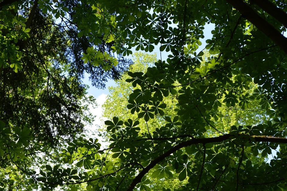 Baldacchino, Foglie, Alberi, Natura, Forest, Glade