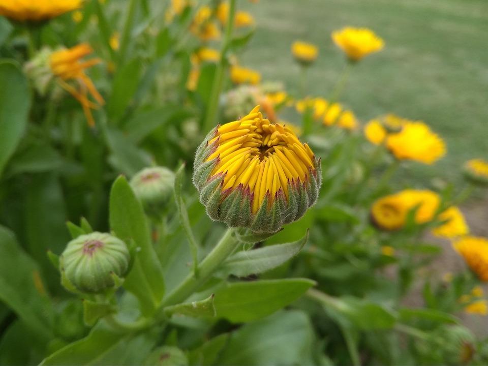 Doğa Arka Plan Kamera çiçek Pixabayde ücretsiz Fotoğraf