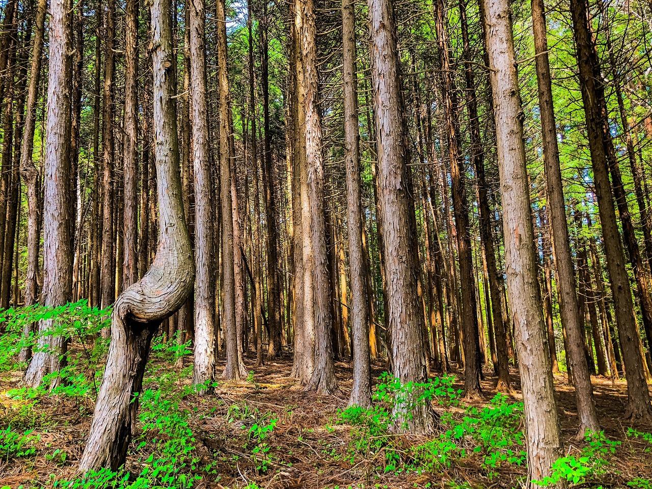 Картинки на телефон фото изменение леса каждому сама долго