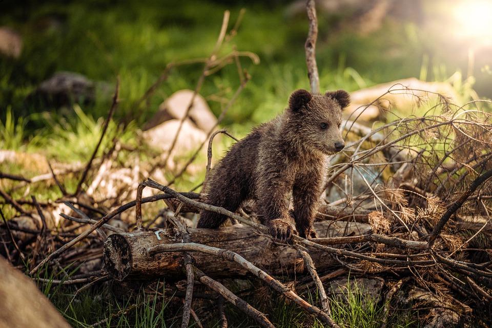 """Résultat de recherche d'images pour """"bébé ours"""""""