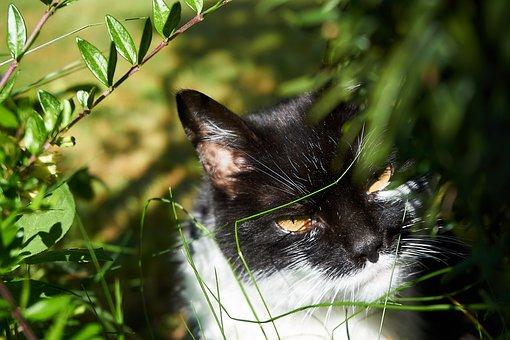 Fotky z čiernej chlpaté mačička