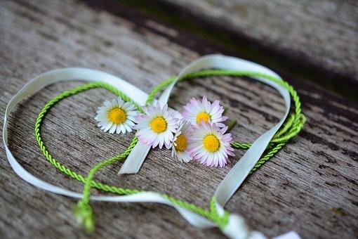 Daisy, Heart, Romance, Valentine'S Day