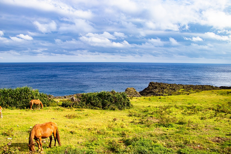 Sea, Horse, Meadow, Sky, Japan, Natural, Okinawa