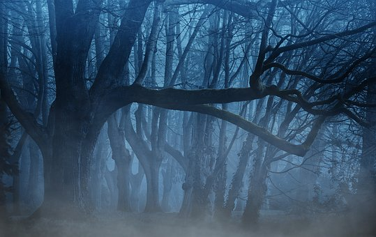 Forest, Fog, Trees, Aesthetic, Weird