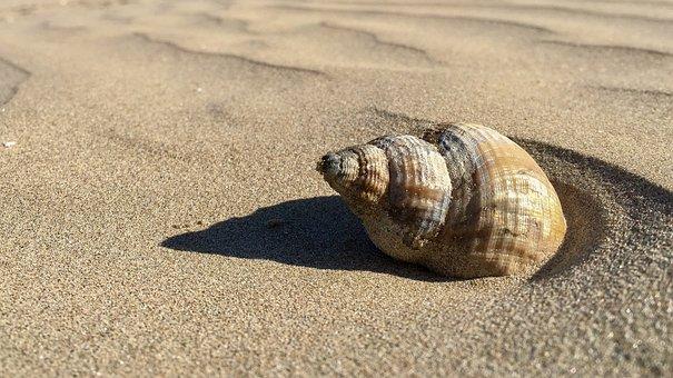ビーチ, シェル, 砂, 海岸, 貝殻, スパイラル, 海岸線, サンディ