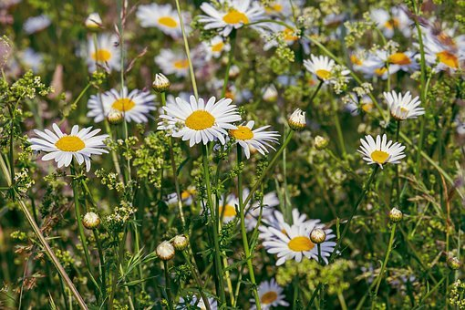 Spring flowers images pixabay download free pictures 40471 free images of spring flowers mightylinksfo Choice Image