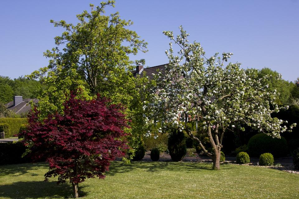 Bomen In Tuin : Bomen tuin de natuur het · gratis foto op pixabay