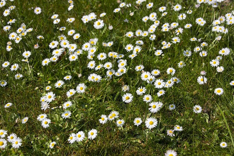 Blume, Garten, Gartenblume, Nahaufnahme, Natur, Blüte