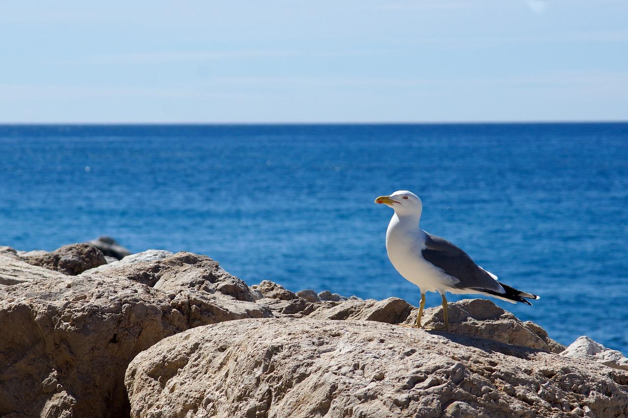 место природа картинки чайки свою странную