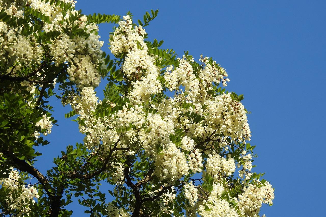 как цветут российские деревья фото теория