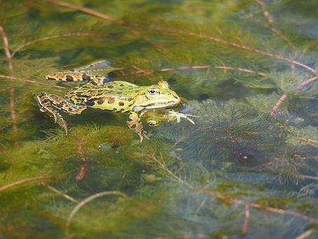žaba jazero datovania
