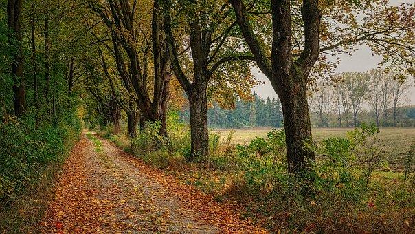 Distância, Avenida, Árvores, Floresta