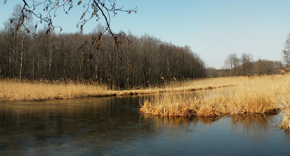 Rzeka Czarna Hańcza, Woda, Czarna Hańcza, Drzewo
