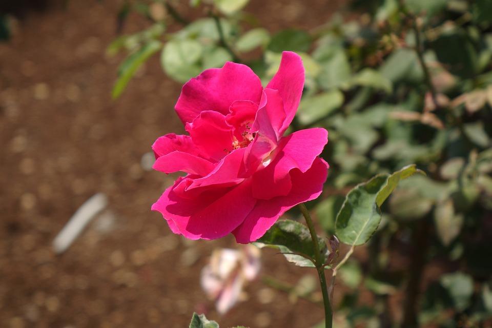 Fleur Nature Rouge Belle Photo Gratuite Sur Pixabay
