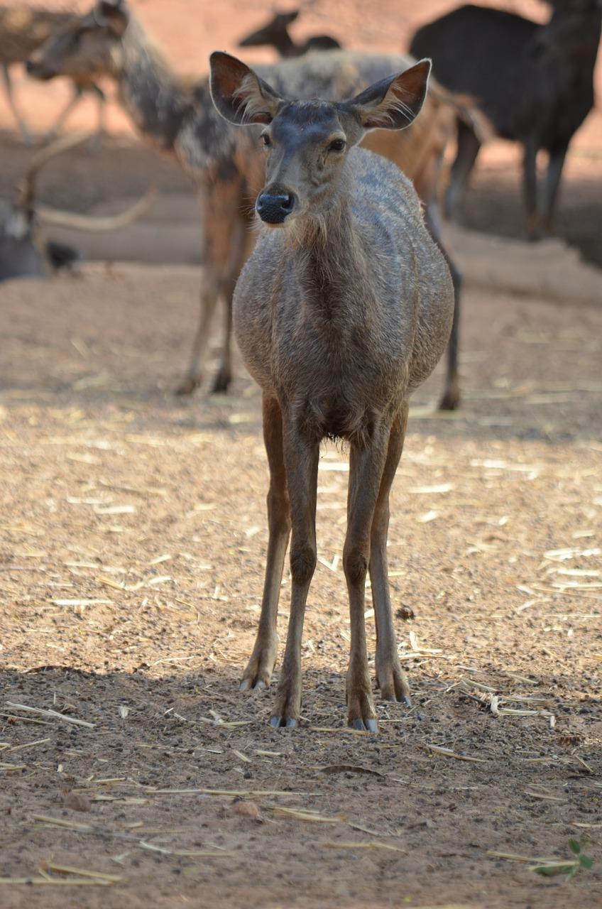 Wild Life Deer Free photo on Pixabay