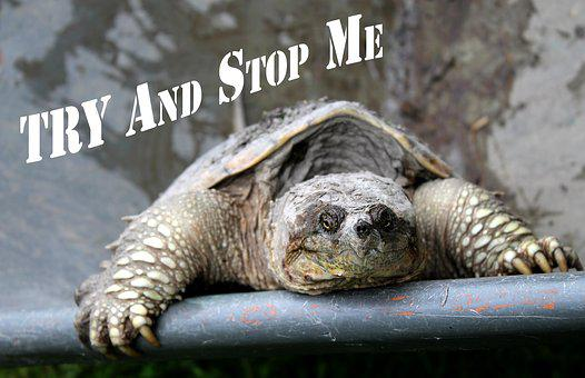 A tortoise somewhere with the words Try and stop me for 301 inspirational and motivational quotes