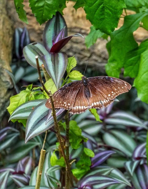 Brown Schmetterling Futterung Kostenloses Foto Auf Pixabay