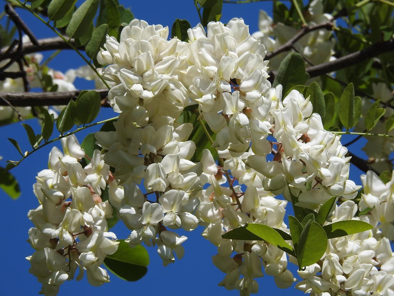 Июньские цветы картинки места