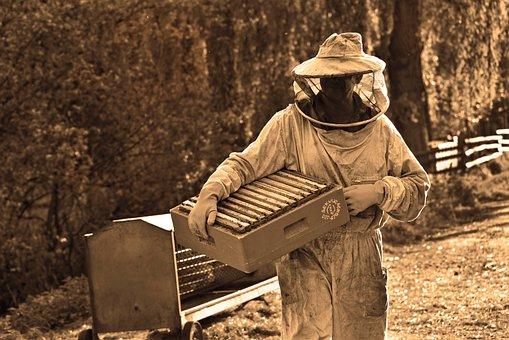 Man, Beekeeper, Beekeeping, Apiarist