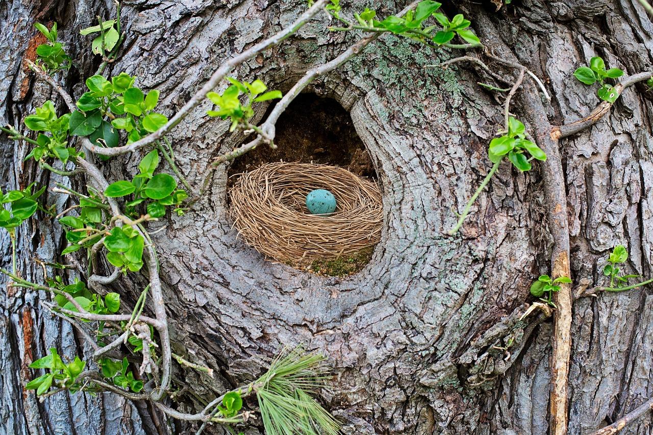 гнездо птиц фото всех людей, интересующихся