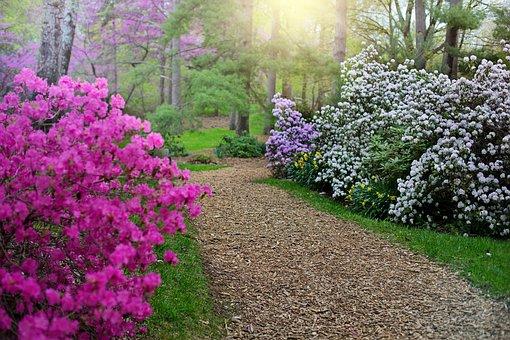 Primavera, Rododendros, Caminho, Passeio